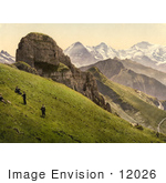 #12026 Picture Of People On A Hillside Near The Swiss Alps Mountains