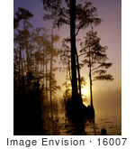 #16007 Picture Of A Beautiful Foggy Morning Sunrise Silhouetting Trees Okefenokee National Wildlife Refuge