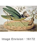 #16172 Picture Of The Political Locust