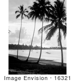 #16321 Picture Of Palm Trees On A Beach At Sunset