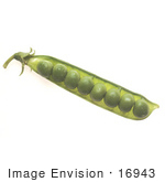 #16943 Picture Of A Row Of Green Peas In A Pea Pod