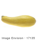 #17135 Picture Of One Whole Yellow Summer Squash Lying Horizontally