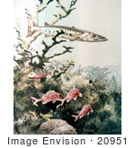 #20951 Clipart Image Illustration of Barracuda and Reef Fish Swimming by JVPD