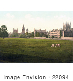 #22094 Stock Photography Of Cows Grasing At Christ Church College And Merton College Oxford Oxfordshire England