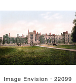 #22099 Stock Photography Of Cows Grazing At Penshurst Place In Tunbridge Wells England