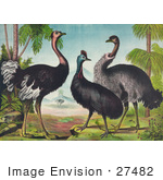 #27482 Illustration Of Three Different Ostrich Birds Standing By Trees With Other Birds In The Background