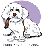 #29031 Royalty-Free Cartoon Clip Art Of A Cute White Bichon Frise Dog Carrying A Leash In Its Mouth And Begging To Be Walked