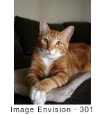 #301 Photograph Of An Orange Cat Sitting With His Paws Crossed