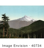 #40734 Stock Photo Of Evergreen Forests And A View Of Mt Hood Oregon