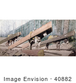 #40882 Stock Photo Of Three Donkeys Hauling Lumber At A Logging Site Colorado