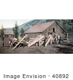 #40892 Stock Photo Of Donkeys Hauling Lumber Through A Village Colorado