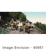 #40951 Stock Photo Of A Pack Train Of Donkeys Transporting Supplies On Mountain Road In Colorado