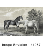 #41287 Stock Illustration Of Two Beautiful Horses Black Hawk And Lady Suffolk Standing Together