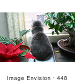 #448 Image Of A Cat Looking Out A Window