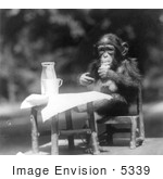 #5339 Chimpanzee At A Table