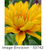 #53742 Royalty-Free Stock Photo Of A Yellow Flower