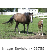 #53755 Royalty-Free Stock Photo Of A Mare And Foal