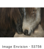 #53758 Royalty-Free Stock Photo Of A Pair Of Horses In Love