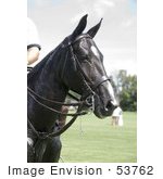 #53762 Royalty-Free Stock Photo Of A Thoroughbred Horse Head