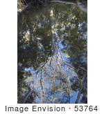 #53764 Royalty-Free Stock Photo Of A View Up To Trees