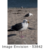 #53842 Royalty-Free Stock Photo Of A Seagull Portrait
