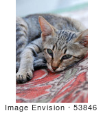 #53846 Royalty-Free Stock Photo Of A Tired Kitten