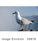 #53878 Royalty-Free Stock Photo Of A Lone Seagull