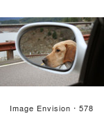 #578 Image Of A Yellow Lab Sticking His Head Out Of A Car Window
