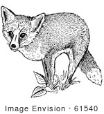 #61540 Clipart Of A Red Fox And Plants In Black And White - Royalty Free Vector Illustration by JVPD