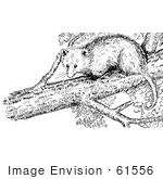 #61556 Clipart Of An Opossum In A Tree In Black And White - Royalty Free Vector Illustration