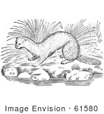 #61580 Clipart Of A Mink On River Rocks In Black And White - Royalty Free Vector Illustration