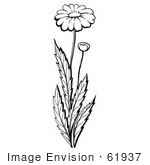 #61937 Clipart Of A Daisy Plant With A Flower And Bud In Black And White - Royalty Free Vector Illustration