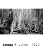 #9572 Picture Of A Lumberjack By Stumps