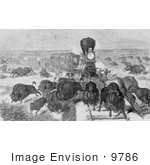 #9786 Picture Of Hunters Shooting Bison From A Train