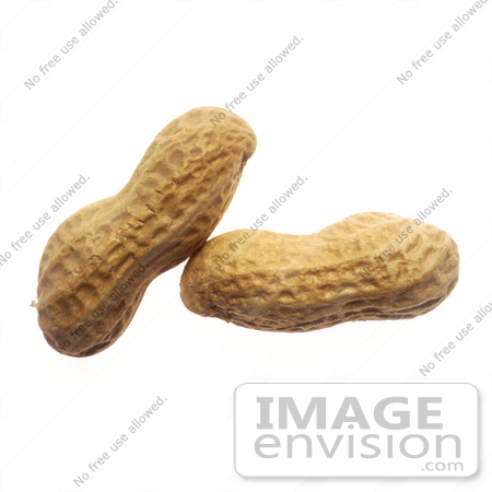 #16977 Picture of Two Whole Peanuts in the Shell, one Leaning on the Other by JVPD