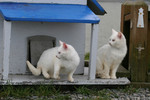 Focused Feral Cats