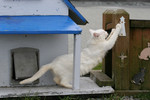 White Feral Cat Scratching a Post