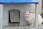 Feral White Cat Sitting Beside a Cat House Door