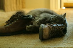 Cat Rubbing Against Leather Boots
