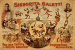 Signorita Galetti And Monkeys