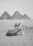 Resting Camels and Men Near the Egyptian Pyramids