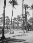 People Walking Through a Forest of Palm Trees