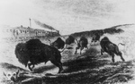 Hunters Shooting Buffalo From a Train