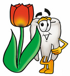 Clip Art Graphic of a Human Molar Tooth Character With a Red Tulip Flower in the Spring